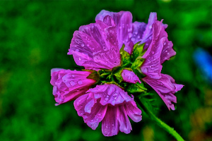 A wild flower bouquet after a summer afternoon rain. . . HDR photography