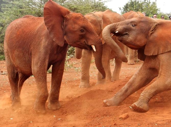 Young elephants, 8/7/14