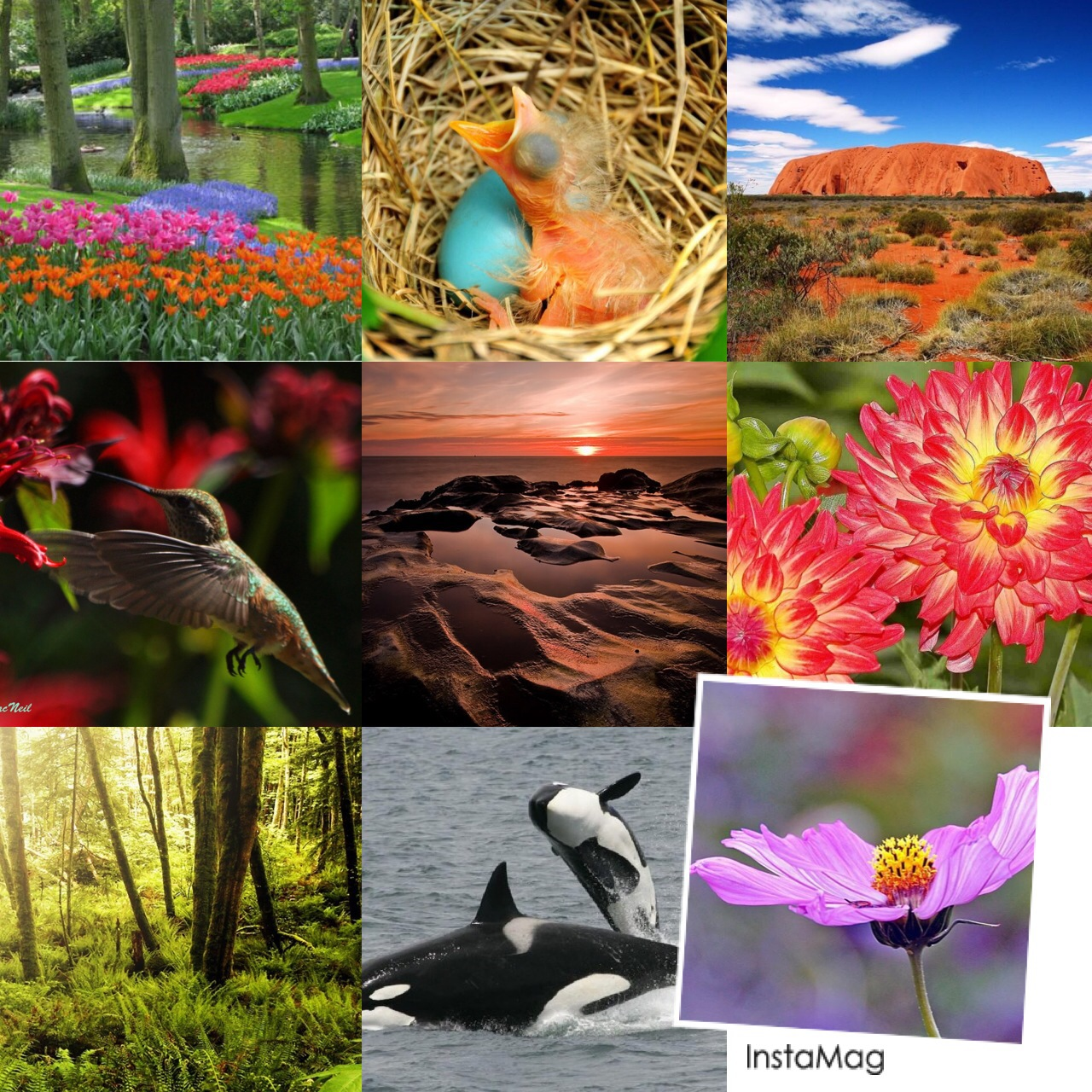 NATURE COLLAGE TO BE AMAZED ABOUT