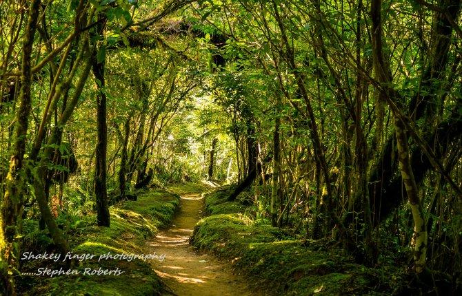 enchanted forest coal creek waterfall walk