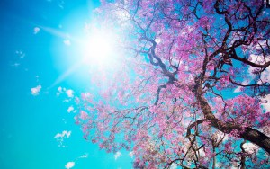remarkable-cherry-blossom-wallpaper-desktop-on-home-garden-with-cherry-blossom-wallpaper